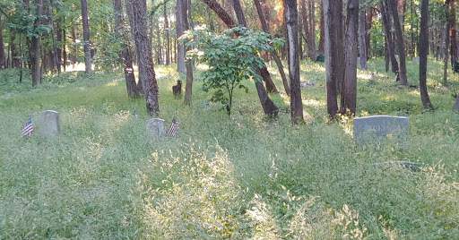 Photograph of a cemetery in the woods, the gravestones barely visible among the tall grass and underbrush.